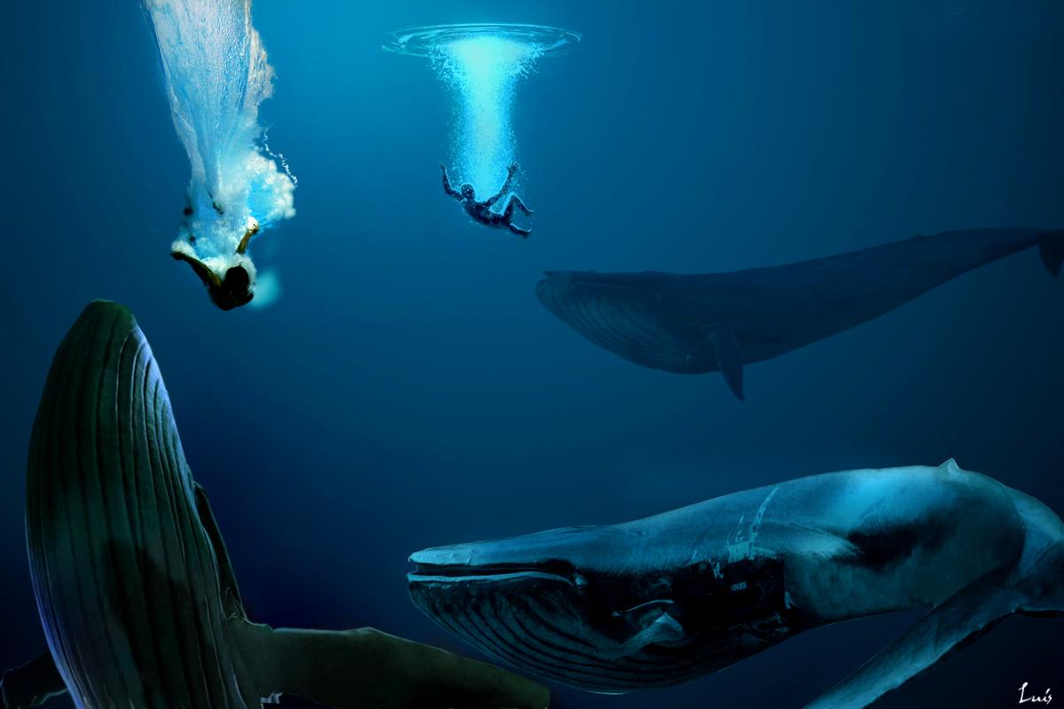 nadadores y ballenas