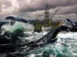 el ataque de los cetaceos